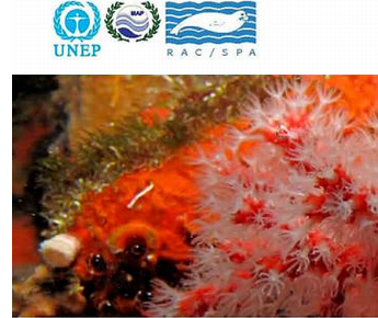 Conservation of Mediterranean Marine Key Habitats Symposia, Portorož, Slovenia, 27 - 31 October 2014